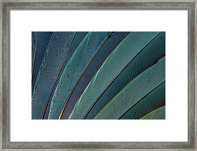 Scarlet Macaw Wing Feathers Framed Print by Darrell Gulin