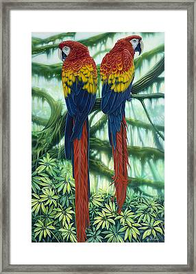 Scarlet Macaws Framed Print by larry Taugher