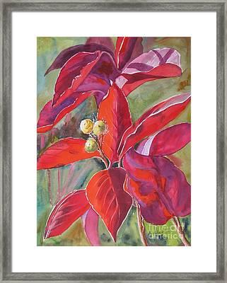 Scarlet Framed Print by Mohamed Hirji