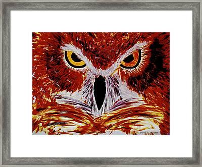 Scarlet Owl Framed Print by David Cates