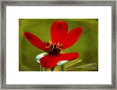 Scarlet Red Framed Print by Darren Fisher