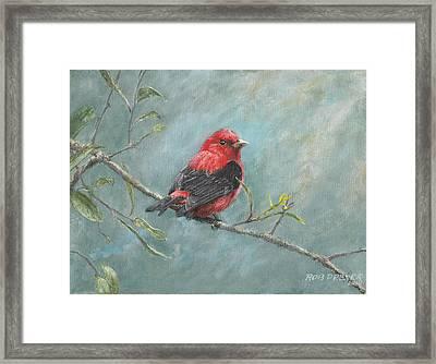 Scarlet Tanager Framed Print by Rob Dreyer