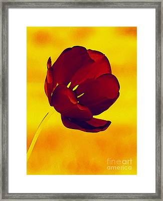 Scarlet Tulip At Sunset Framed Print