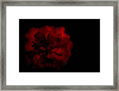 Scarlett Rose Black Background Framed Print by Paul W Sharpe Aka Wizard of Wonders