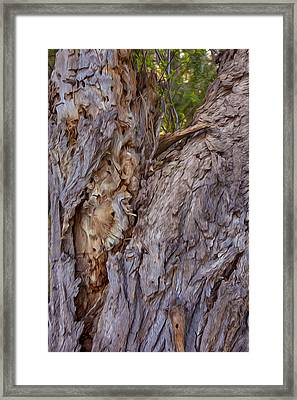 Scarred And Beautiful Framed Print by Omaste Witkowski