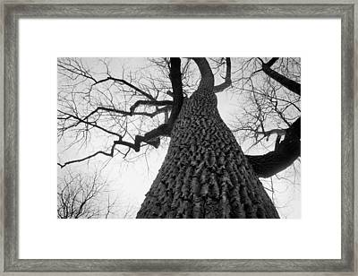Scary Tree Framed Print by Richie Stewart