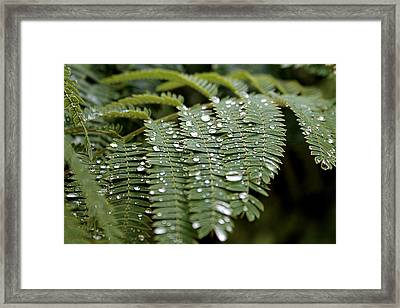 Scattered Drops Framed Print by Abril Gonzalez