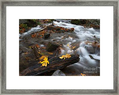 Scattered Gold Framed Print by Mike Dawson