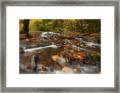 Scattered Leaves Framed Print by Mike  Dawson