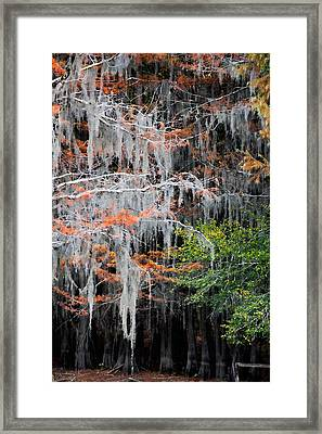 Scattered Rust Framed Print by Lana Trussell