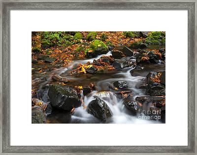 Scattered Seasons Framed Print