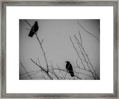 Scavengers Framed Print