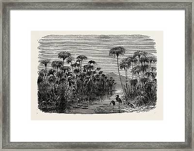 Scene On A Tributary Of The Nile Bulrushes Framed Print