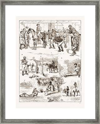 Scenes Of Australian Life, 1876 1. Horse Sale Framed Print by Litz Collection