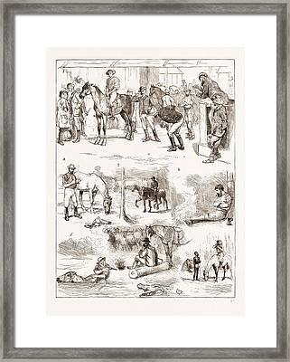 Scenes Of Australian Life, 1876 1. Horse Sale Framed Print