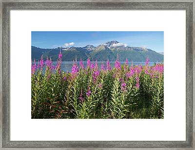 Scenic Landscape Of Fireweed Framed Print