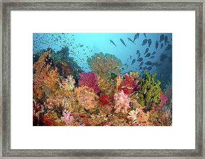 Scenic Of Diverse Reef Life, Misool Framed Print by Jaynes Gallery