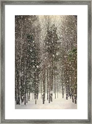 Scenic Snowfall Framed Print by Christina Rollo