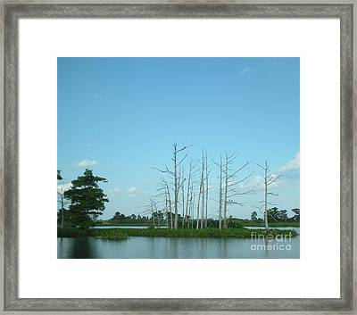 Framed Print featuring the photograph Scenic Swamp Cypress Trees by Joseph Baril