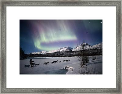 Scenic View Of Dog Team Mushing On The Framed Print