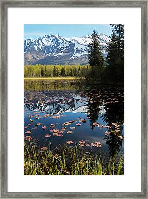 Scenic View Of Lily Pads On A Pond Framed Print