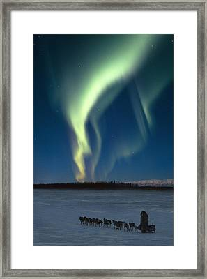 Scenic View Of Musher With Northern Framed Print