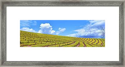 Scenic View Of Vineyard In Springtime Framed Print