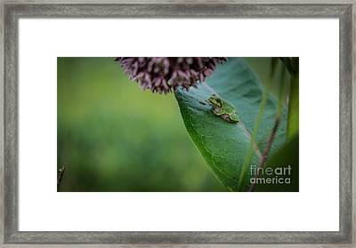 Schlitz Audubon Tree Frog Framed Print