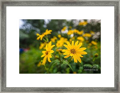 Schlitz Audubon Wild Flower Framed Print