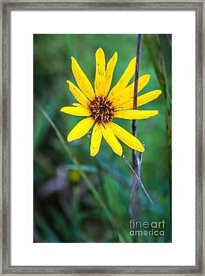 Schlitz Wild Flower Framed Print