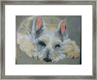 Schnauzer Pet Portrait Original Oil Painting 8x10 Inches Made To Order Framed Print by Shannon Ivins