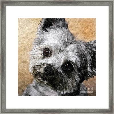 Schnauzer Puppy Painting Framed Print by Bob and Nadine Johnston
