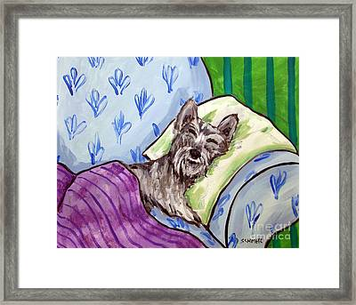 Schnauzer Sleeping Framed Print by Jay  Schmetz