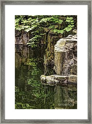 Framed Print featuring the photograph Scholar Garden Reflections by Vicki DeVico