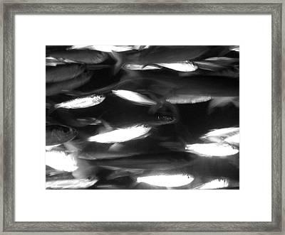 School Framed Print by Barbara Bardzik