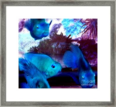 School Of Blue Fish Abstract Framed Print by Gail Matthews