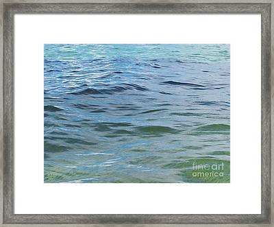 School Of Fish  Framed Print