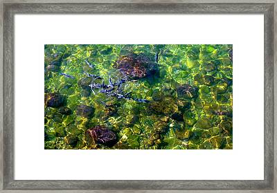 School Of Fish Framed Print by Olga Breslav