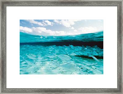 School Of Fish, Submerged Framed Print by Panoramic Images