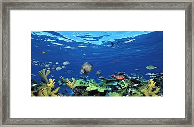 School Of Fish Swimming In The Sea Framed Print