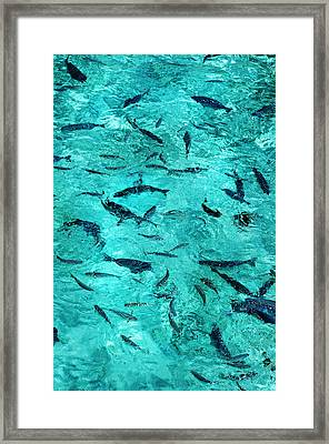 School Of Fishes In The Transparent Water Framed Print by Jenny Rainbow