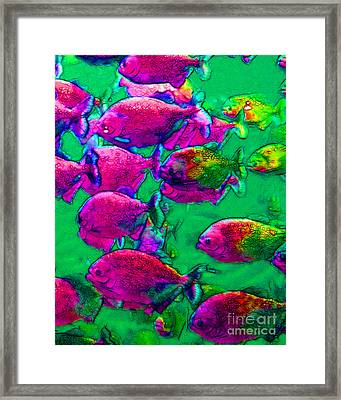 School Of Piranha V2 Framed Print by Wingsdomain Art and Photography