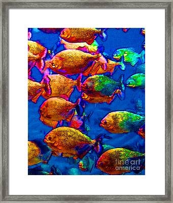 School Of Piranha V3 Framed Print by Wingsdomain Art and Photography