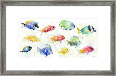 School Of Tropical Fish Framed Print