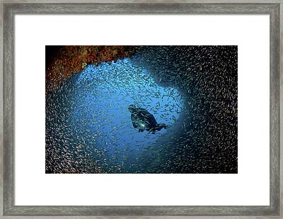 Schooling Baitfish And Diver At Cave Framed Print by Jaynes Gallery