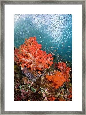 Schooling Fish Swim Past Colorful Framed Print