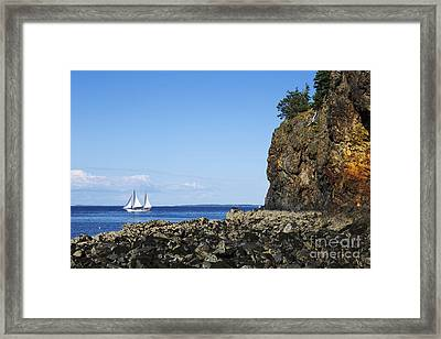 Schooner Sailing In The Bay Framed Print by Diane Diederich