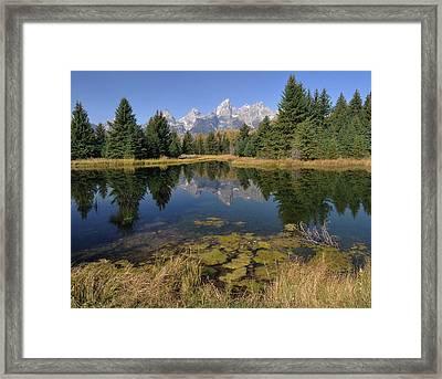 Schwabacher Landing Morning Framed Print by Stephen  Vecchiotti