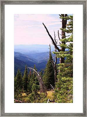 Schweitzer Mountain 1 Framed Print by Ellen Tully