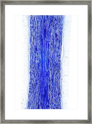 Sciatic Nerve Framed Print by Dr Keith Wheeler